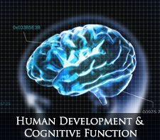 human development and cognitive function